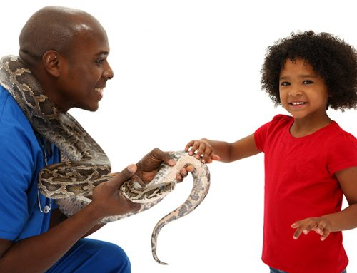 Considering a Pet Reptile? What You Need to Know