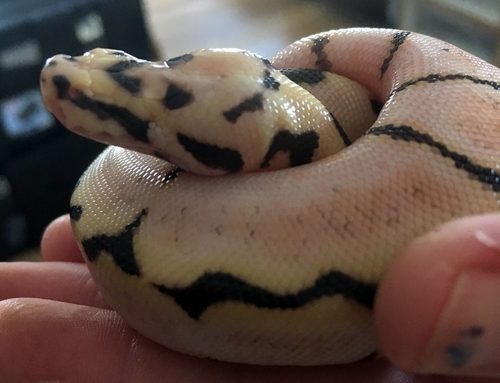 Snake Eyes- A Gamble at Best