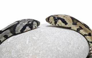 Mating Habits in the Reptile World