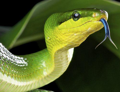 Happy World Snake Day!
