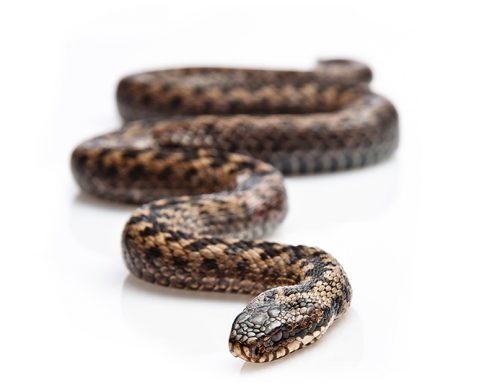 Snake Locomotion