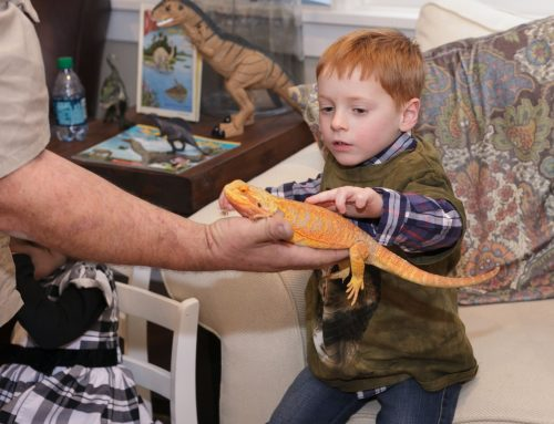 Reptile Shows of New England Will Travel To New York