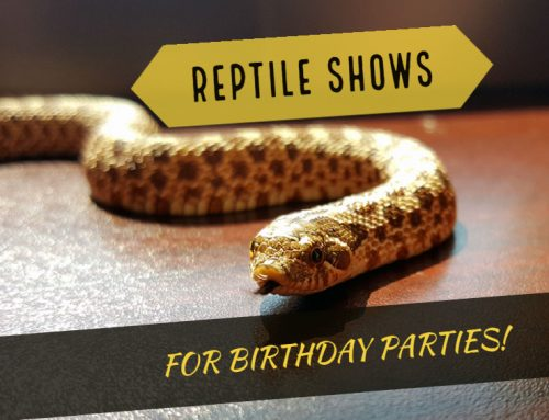 Reptile Shows For Birthday Parties