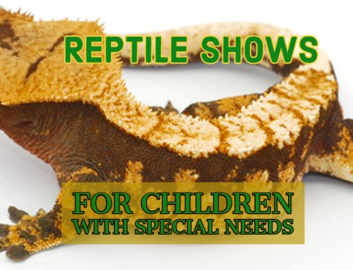 Reptile Shows For Children With Special Needs